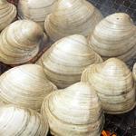 潮干狩りでホンビノス貝を採る!ポイントは?おいしい食べ方は?