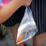 お祭りの金魚は水道水で大丈夫なの?寿命や育て方は?