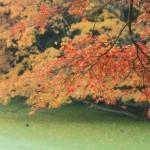 2015の養老渓谷の紅葉を予想!渋滞回避と駐車場について