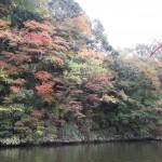 関東で一番遅い紅葉亀山湖はピークはいつ?