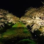 お花見ライトアップ|東京のおすすめスポット