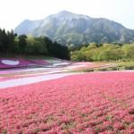 GW近場で日帰りにおすすめの場所は?芝桜と温泉を楽しもう