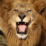 千葉動物公園ライオンはいつから?遊園地跡地ではポニーが待ってるよ