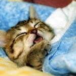 睡眠しても疲れが取れない原因は?試して欲しいあれを紹介します!