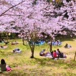 広島ちゅーピーパークのお花見、子連れにおすすめの場所はどこ?