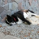 犬が夏バテしたときの対策 外飼い犬が食欲不振や下痢の時は?